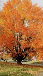 """Autumn in Natick"""