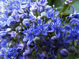 """Little Blue Flowers"""
