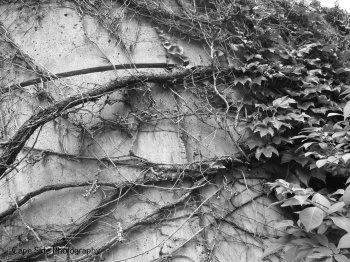 """Root Wall"""