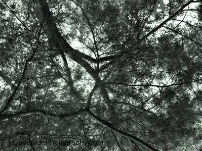 """Trees from Below"""