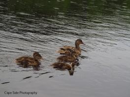 """""""Duckies"""""""
