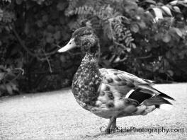 """Very Photogenic Duck"""